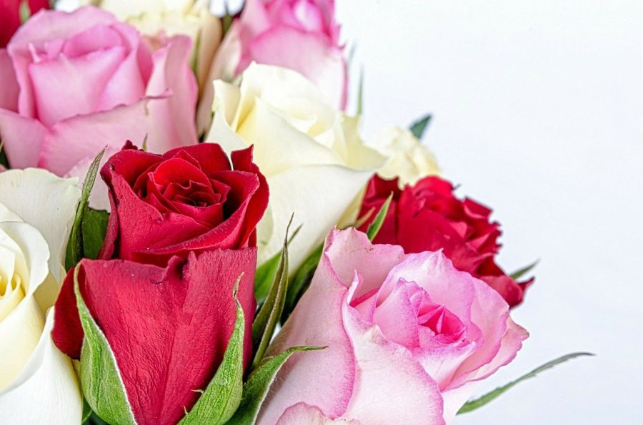 couleurs des roses signification